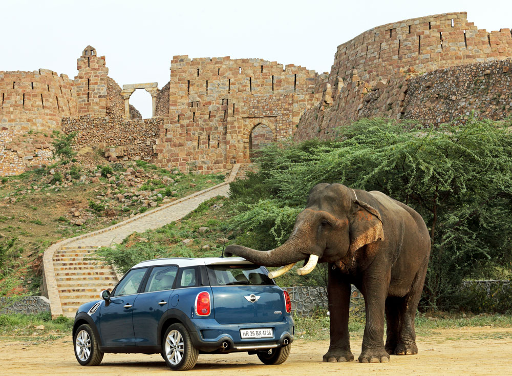 MINI with an elephant