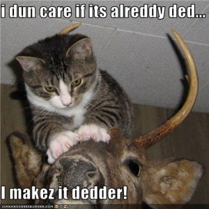 funny pictures cat does not like taxidermy